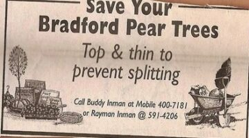 Brentwood TN Bradford Pear Tree Trimmers