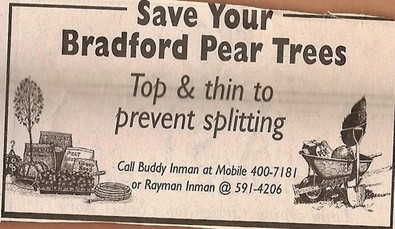 bradford-pear-tree-trimmer.jpg