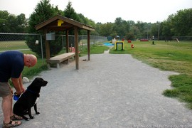 Things To Do With Your Dog In Brentwood, TN
