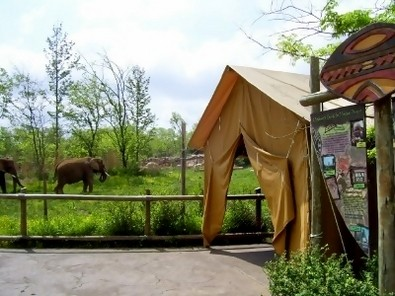 nashville-zoo-elephants.jpg