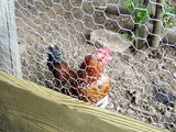 tennessee-chicken-coop.jpg