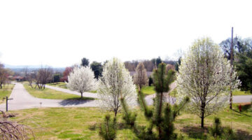 Native Tennessee Trees and Plants