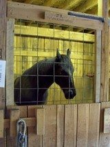 tennessee-walking-horse-barn.jpg