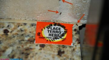 Before we started using the Terro ant traps, there were ants all over our kitchen counter, backsplash, and stove!