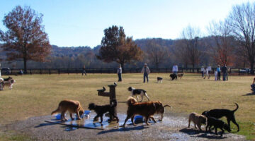 Dog Parks In Brentwood, Franklin, And Nashville, TN