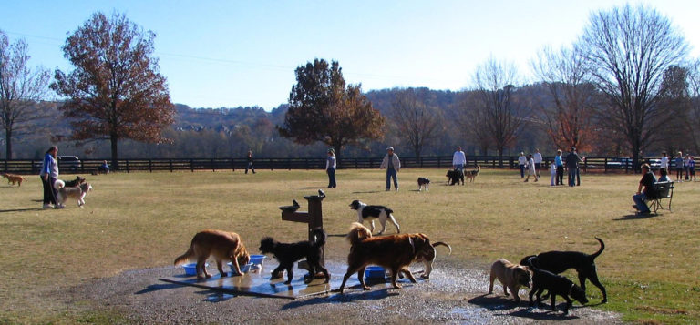 Dog Parks In Brentwood Franklin And Nashville Tn The