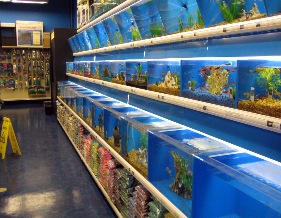 Fun things to do with kids in the brentwood place shopping for Tropical fish shop