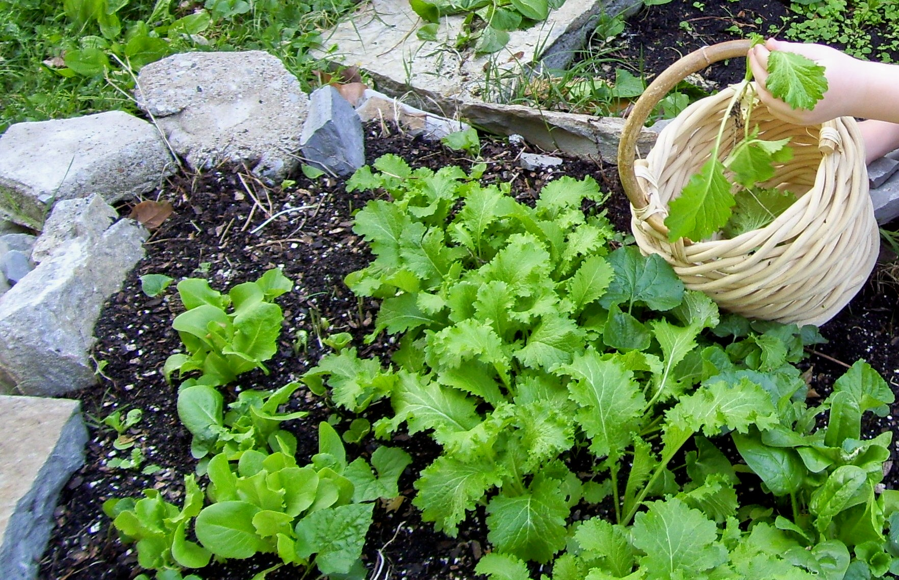 Planting annuals in middle tennessee fun times guide to - Vegetable garden what to plant in april ...